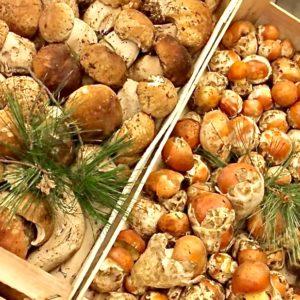 Funghi Porcini e Ovuli